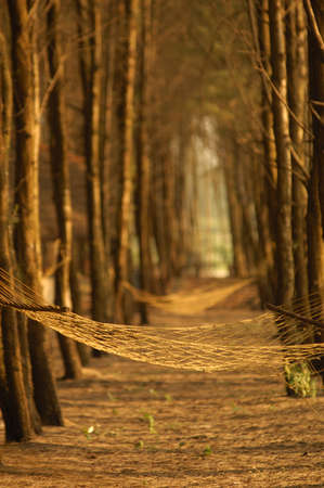 Empty hammock tied between trees at Tarkarli beach,Malvan,Sindhudurga,Maharashtra,India