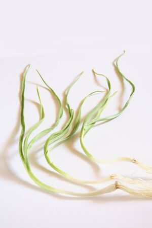 Indian spice,fresh green Garlic leaves with root Lahsun Allium sativum on white background Stock Photo