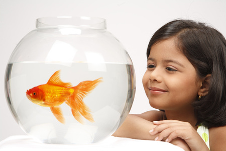 Eight year old girl watching movement of gold fish in glass bowl Stock Photo