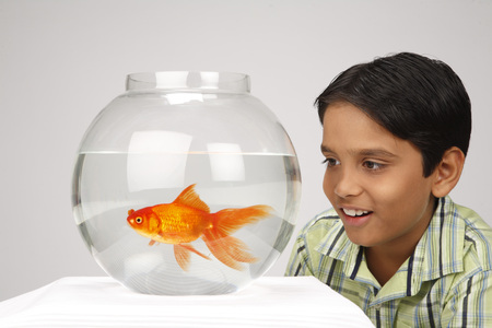 Ten year old boy watching movement of gold fish in glass bowl Stock Photo