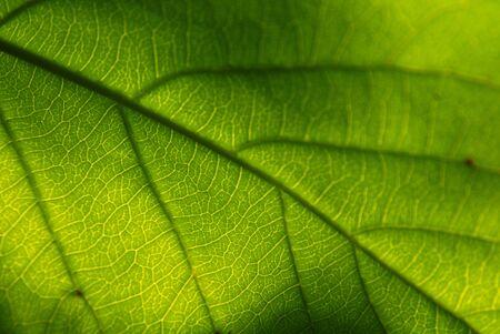 Almond tree leaf Фото со стока