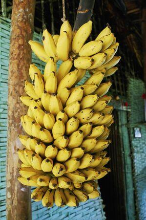 フルーツ、南バナナ