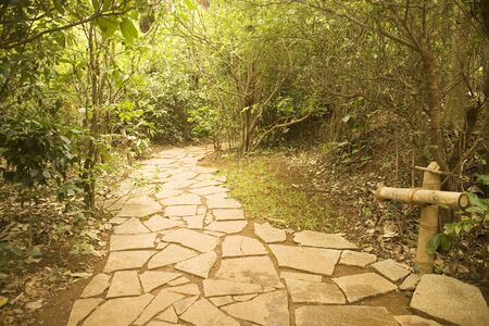 Stone path in green trees,Palolem beach,Goa,India