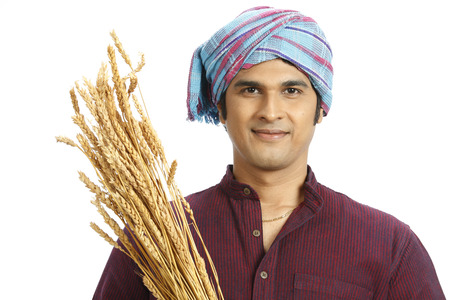 Rich Indian farmer holding harvested golden wheat crops gamcha tied on head Stock Photo