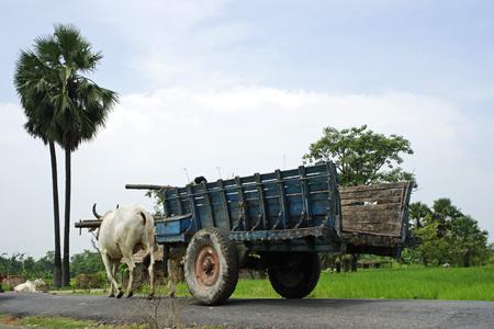 Bullock carrello sulla strada, vita del villaggio del patrimonio, Vaishali a Kesariya, Bihar, India