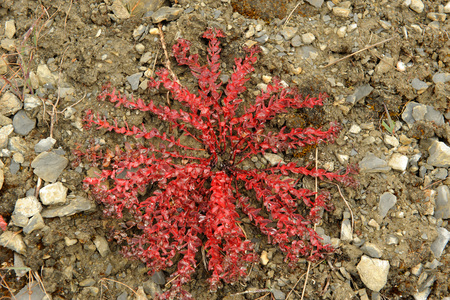 Wild flower,Thilicho,Nepal