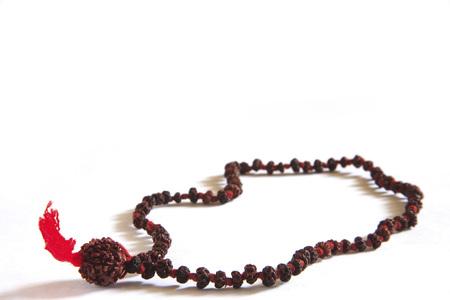 Concept,rudraksh chanting mala seed of eleocarpus ganitrus used in rosary on white background