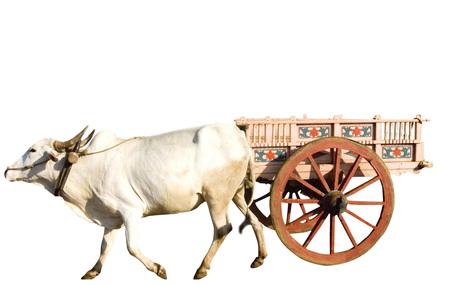 Bullock cart on white background
