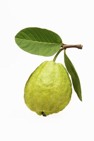 Green guava psidium guajava,India Stock Photo