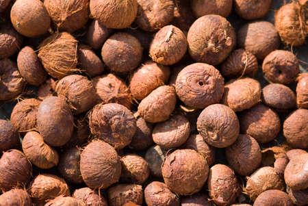 Dry betel nuts,Gadag,Karnataka,India Stock Photo
