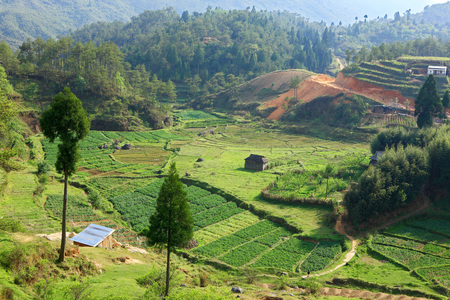 Fields on hill side,Meghalaya,India