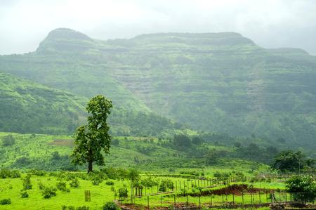 Landscape in monsoon at Panvel,district Raigadh,Maharashtra,India