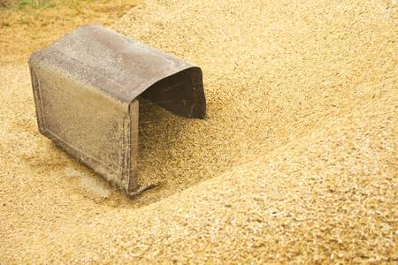 chaff: rusty bucket in the chaff behind rice mill tube at countryside North east of Thailand Stock Photo