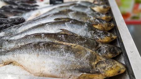 Iridescent shark, Striped catfish, Sutchi catfish on ice in supermarket. Stock fotó
