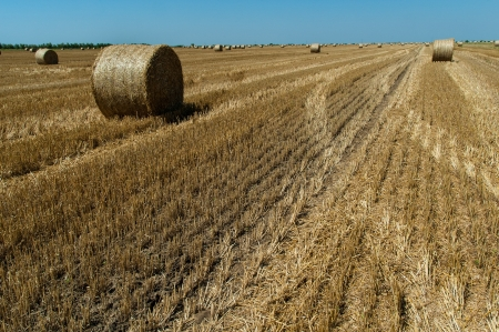 Straw bales in Croatian countryside after the harvest