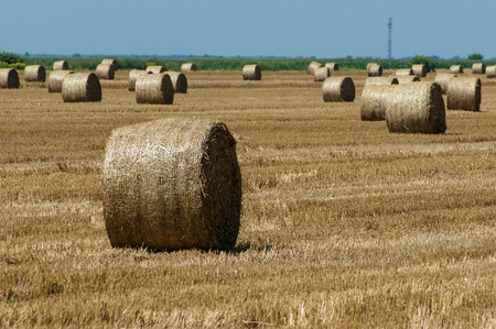Straw bales in Croatian countryside after the harvest photo