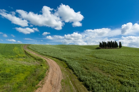 The famous group of cypresses in Val d Orcia, Tuscany