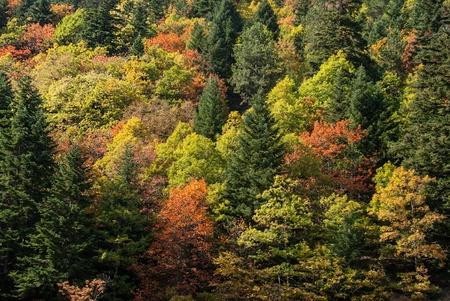 Autumn colorful foliage on a mountain of Makedonia, Greece