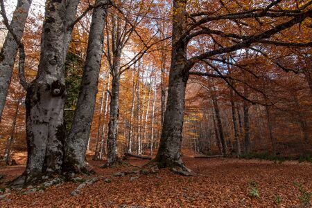 Autumn colors in a forest of Makedonia, Greece Stock Photo