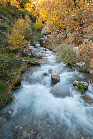 A brook in a forest in Epirus, Greece Stock Photo