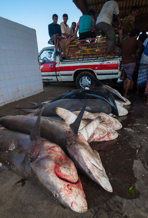 Killed sharks for sale in the famous fish market of the city on May 12, 2007 in Al Hudaydah, Yemen. Due to the rich with fish species Red Sea, fish markets play a central role in the economic life of Yemen.