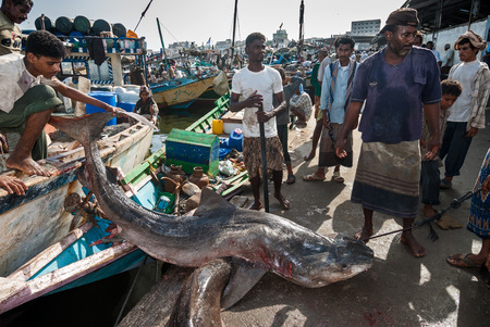 Unidentified fishermen carry a dead shark in the famous fish market of the city on May 12, 2007 in Al Hudayda, Yemen. Due to the rich with fish species Red Sea, fish markets play a central role in the economic life of Yemen.