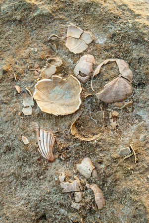 laconia: Fossil shells in the petrified forest of Cape Maleas in Laconia, Greece Stock Photo