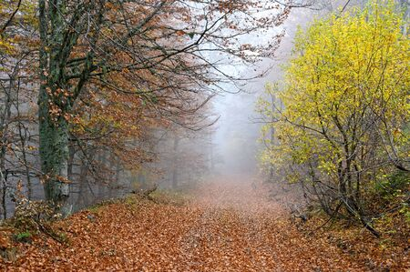 Foggy landscape with autumn colorful foliage on Mount Grammos in northwestern Greece
