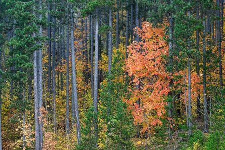 Autumn colorful foliage on Mount Grammos in northwestern Greece