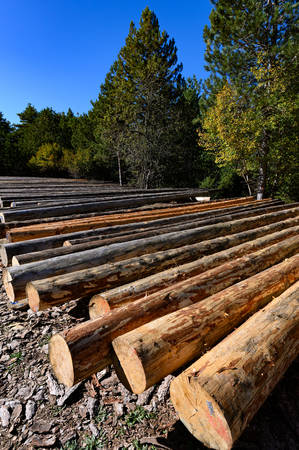 Freshly cut tree logs, ready for transportation in Greece Фото со стока