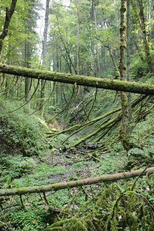 Mossy forest, Black Forest, Schwarzwald, Germany photo