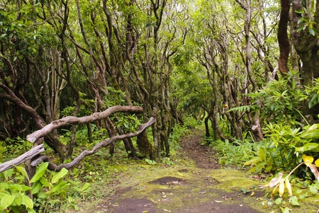 Walking path in forest of Faial island, Azores Stock Photo