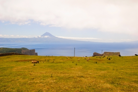 Pasture landscape of Sao Jorge island with Pico mountain behind, Azores, Portugal photo