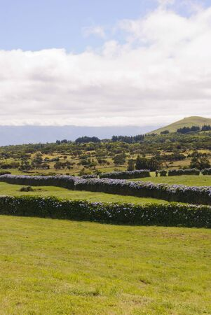Landscape of green pasture and meadows at Sao Jorge island Azores, Portugal photo