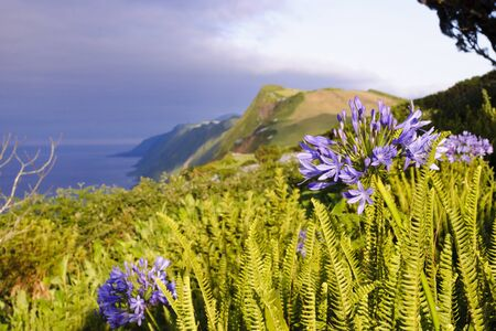 Afternoon view over cliffs of Sao Jorge island with flowers blossoming, Azores, Portugal photo