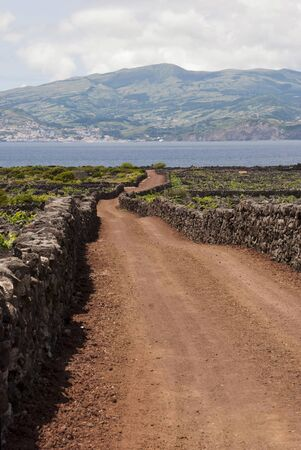 agriculture azores: Road between vineyards. Old vineyards surrounded with stones are part of UNESCO world heriage.  Stock Photo