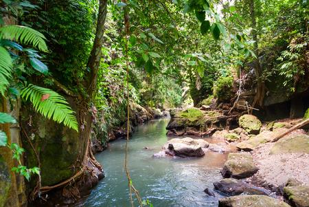selva: Puente sobre el r�o en la selva gato balin�s, Indonesia