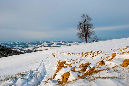 mud snow: Field in winter covered with snow and tree in background