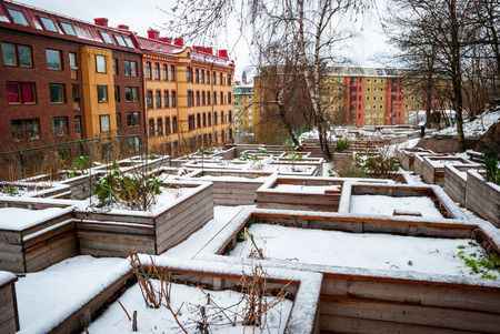 communal: Communal vegetable gardens in Gothebburg in snow