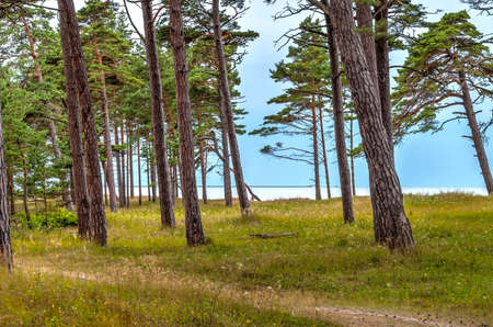 pinetree: View on Liepaja beach from green bright forest