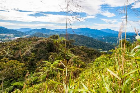 cameron highlands: Hills in Cameron highlands in sunlight, Malaysia Stock Photo