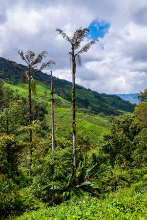 cameron highlands: Green landscape of Cameron highlands, Malaysia