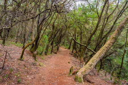thru: Path thru the forest at Blue mountains national park, Australia