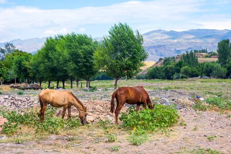 Two horses in central asian countryside, Kazakhstan Stock Photo