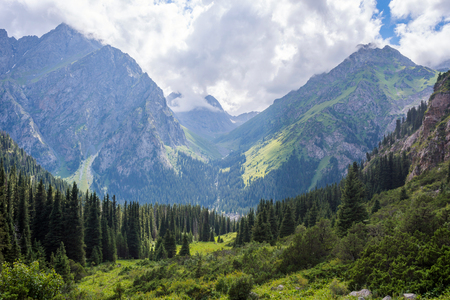 Spruces and mountains in Karakol national park, Kyrgyzstan