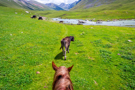 View over green valley, cattle and mountains from the horse back, Altyn Arashan, Kyrgyzstan Stock Photo