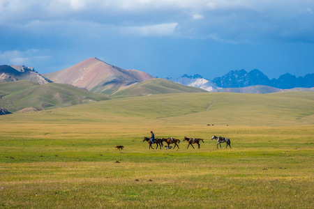 Man riding and guiding horses over scenic landscape of Song Kul lake.