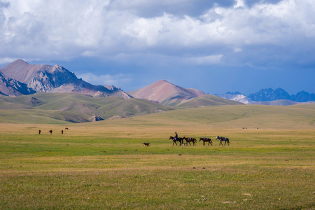 SONG KUL, KYRGYZSTAN - AUGUST 11: Man riding and guiding horses over scenic landscape of Song Kul lake. August 2016 Editorial