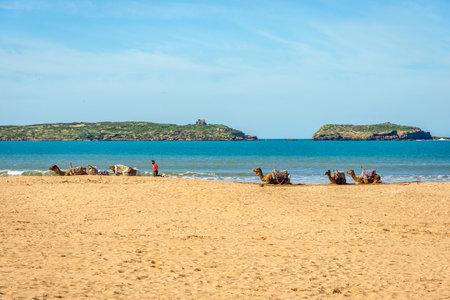 ESSAOUIRA, MOROCCO - DECEMBER 13: Camels lying on the sandy beach by the sea in Essaouira beach. December 2016
