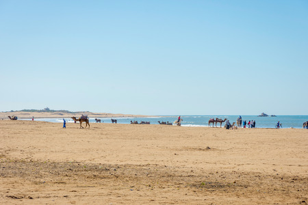Camels, horses and people on the sandy beach of Essaouira, Morocco Stock Photo